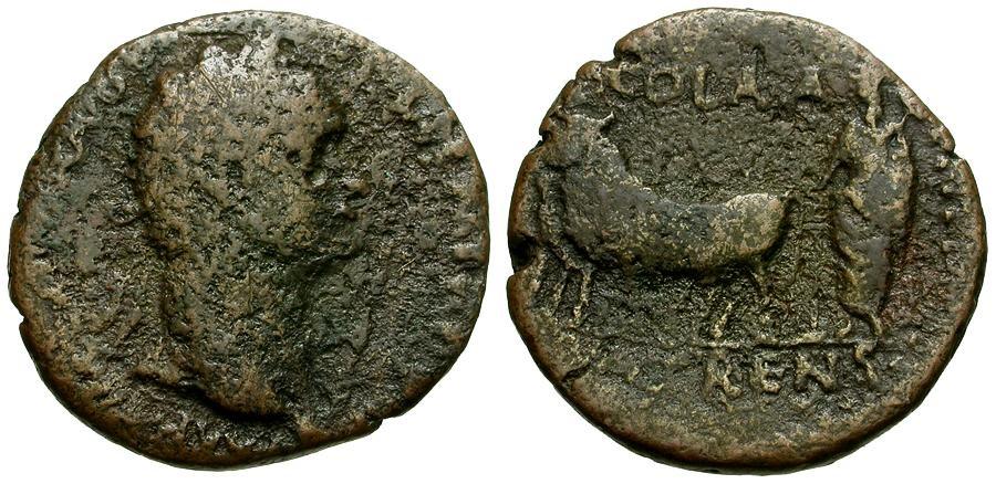 Ancient Coins - Domitian.  Achaea. Patrae Æ24 / Priest Ploughing