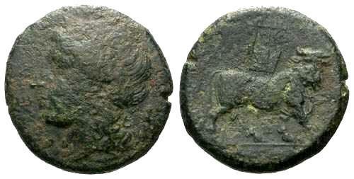 Ancient Coins - F/F+ Cales Campania AE20 / Man-headed Bull