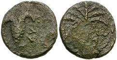 Ancient Coins - Judaea. Bar Kochba Revolt Æ19 Year 3 / Grapes and Palm tree