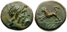 Ancient Coins - Pisidia. Komama Æ14 / Lion