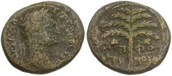 Ancient Coins - Trajan. Judaea Sepphoris. Galilee Mint Æ24 / Palm Tree
