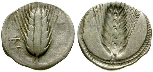 Ancient Coins - VF/VF Lucania, Metapontum 29mm AR Stater / Grain Ear
