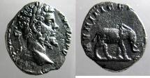 Ancient Coins - Septimius Severus: Denarius, Elephant reverse