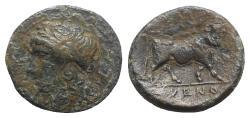 Ancient Coins - Campania, Cales, c. 265-240 BC. Æ