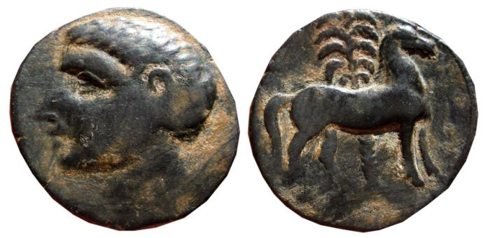 Ancient Coins - SPAIN Carthaginian bronze calco. Male head - horse with palm. 238 - 208 B.C. Carthagonova mint.